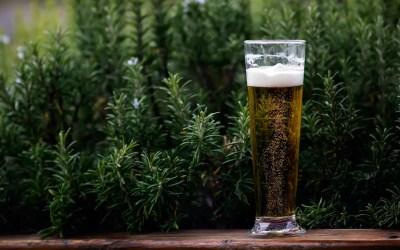 La birra più antica del mondo ha 13.000 anni