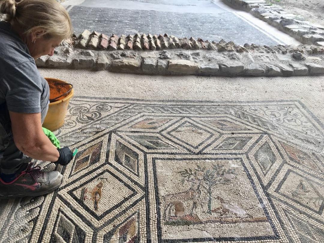 pulitura mosaico del Cervo