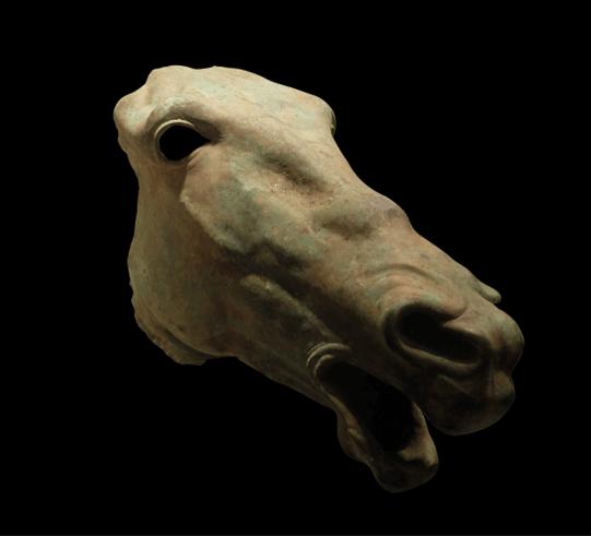 cavallo San Casciano dei Bagni