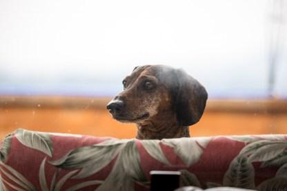 Kobe the dog :-)