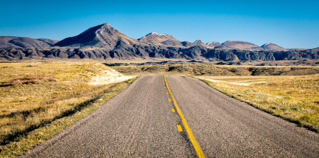The road to a wild goose chase after bison