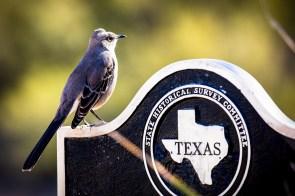 Some kind of Texas bird