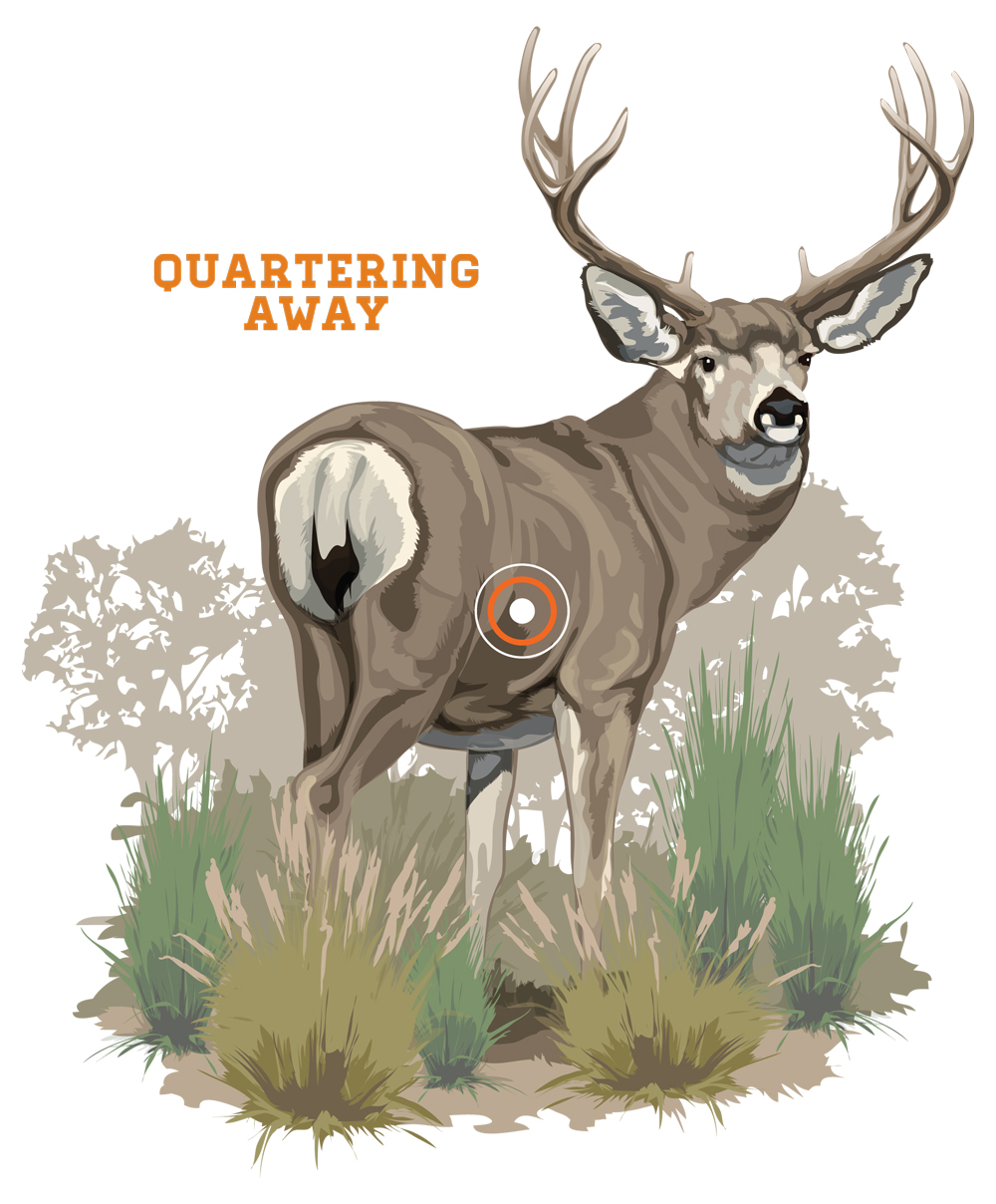 whitetail deer shot placement diagram free tool for flow chart diagrams bowhunting how to where aim on a aiming low is usually best