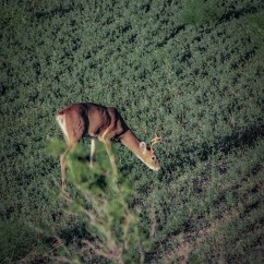 Whitetail Deer Shot Placement Diagram What Is A Carroll Bowhunting How To Where Aim On When From Treestand That S Roughly 20 Feet High And Shooting At 15 Yards