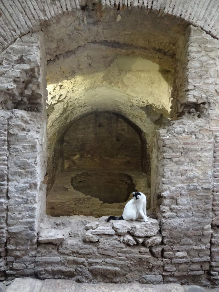 ArchiDiAP  Museo Nazionale Romano  Crypta Balbi