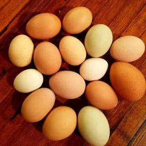Did you know that there is a rainbow of eggshell color