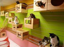 Catswall - A Modular Cat Climbing Wall Perfect for You Pet