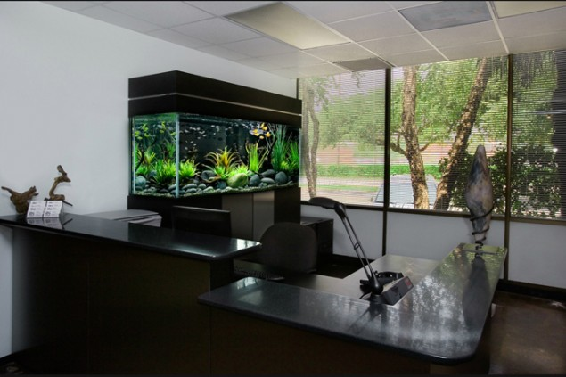 29 Amazing Aquariums For Impressive Decoration Of Your Home