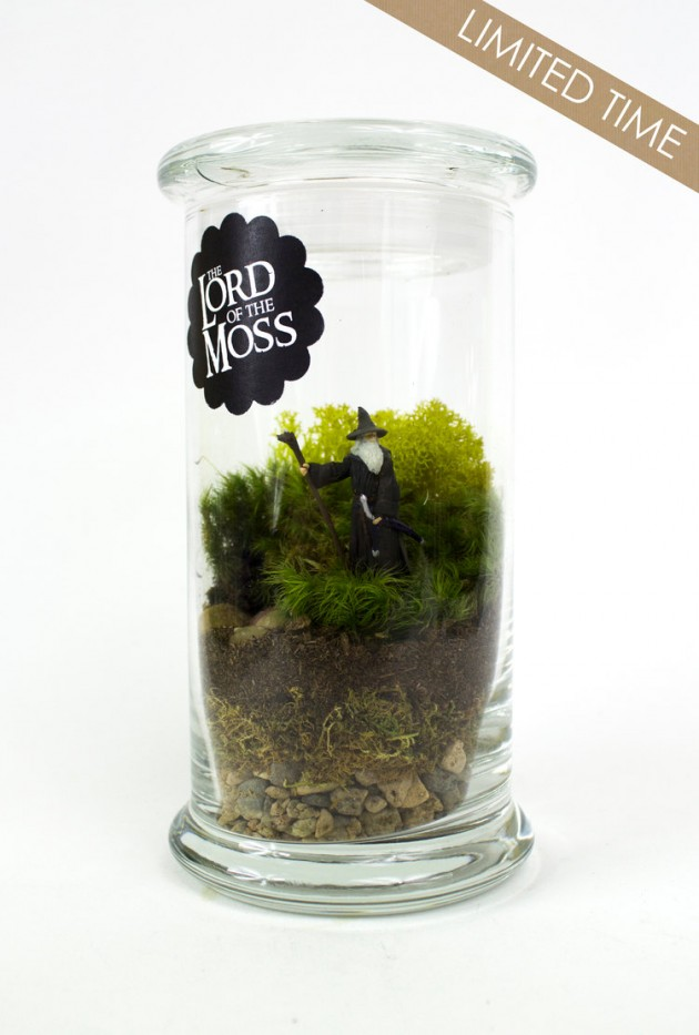 18 Ideas For Terrarium Decoration To Fall In Love With