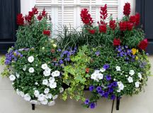 19 Irresistible Flower Box Ideas For Your Windows