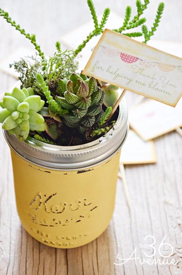 Mini Succulent Plants