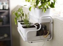 Mini Garden In The Bath  Yes Or No?