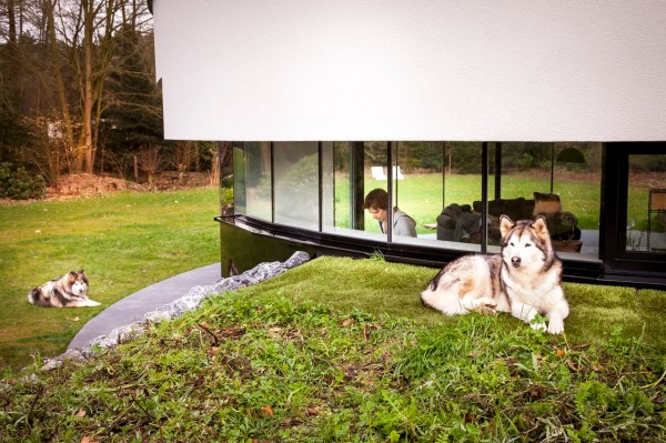 House Design Dog Friendly Home 123dv