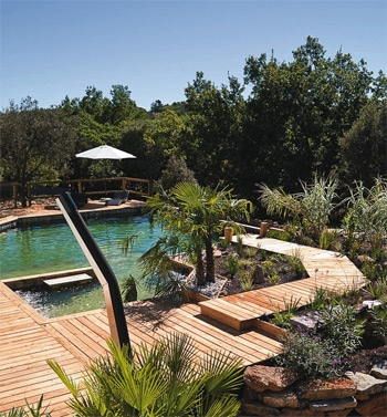 piscine naturelle au milieu du vert