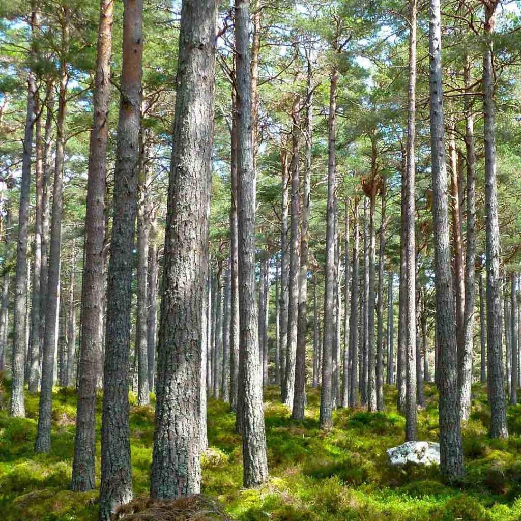 3ème édition Assises de la forêt et du bois