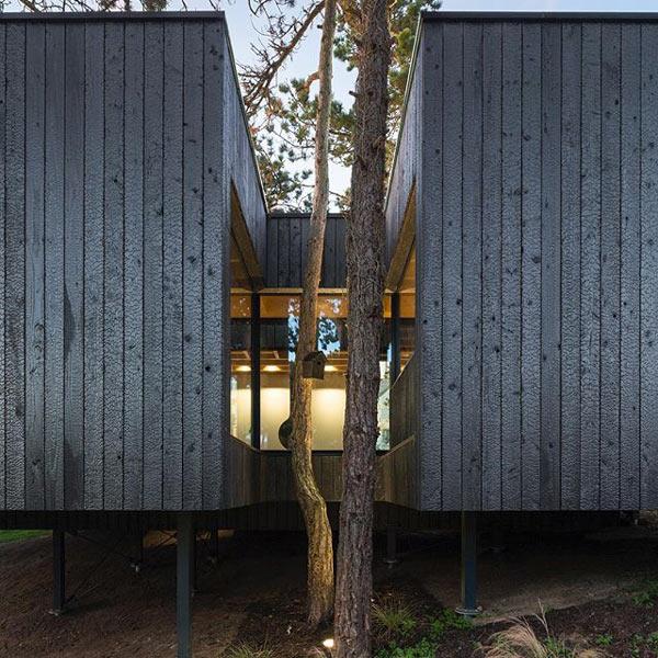 maison en bois sombre au milieu de la forêt