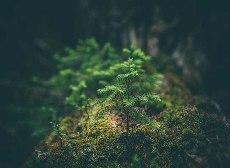 arbre-foret-maison