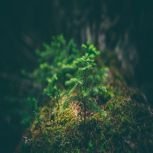 deforestation-arbre-foret
