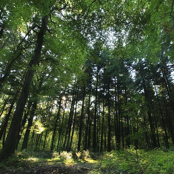 Une forêt gérée durablement selon les critères du label PEFC © PEFC