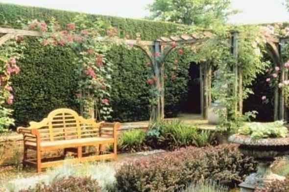 vines with a trellis
