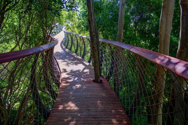 Citt del Capo la passeggiata su un ponte al di sopra degli alberi