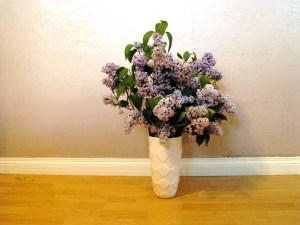Organic Free Range Lilacs, Post-Pruning