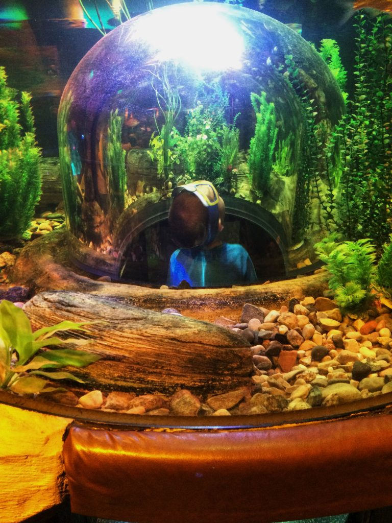 Sealife Aquarium bubble