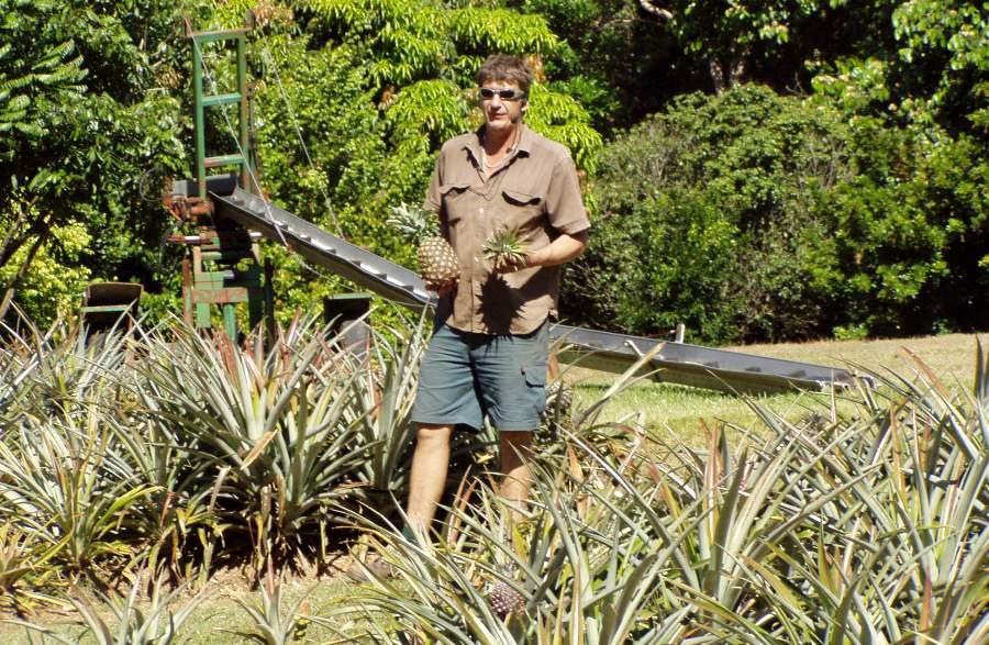 Volunteering Pineapple Farm
