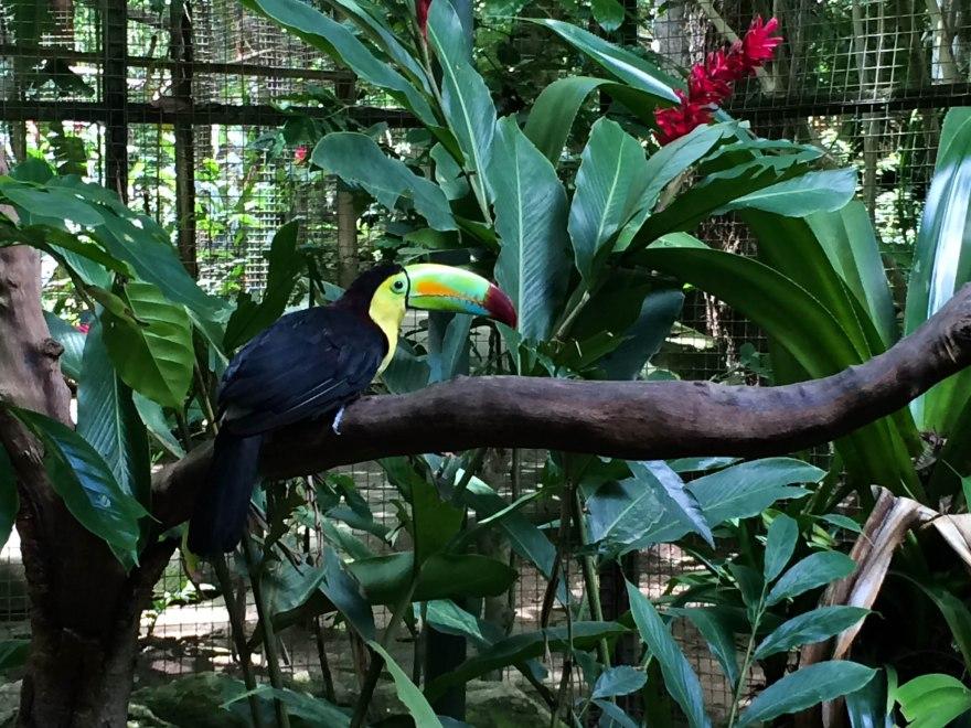 Macaw Mountain 3
