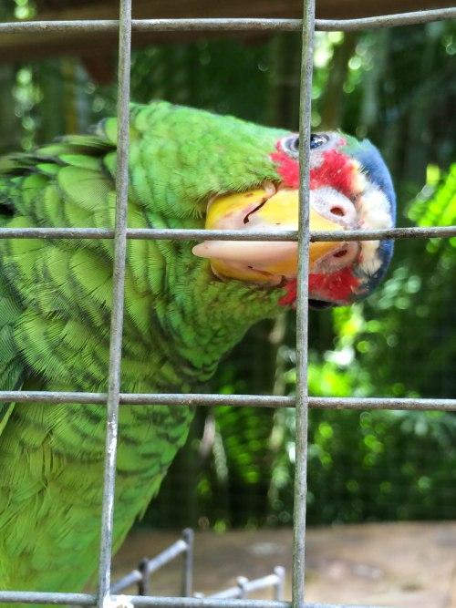 Macaw Mountain 11