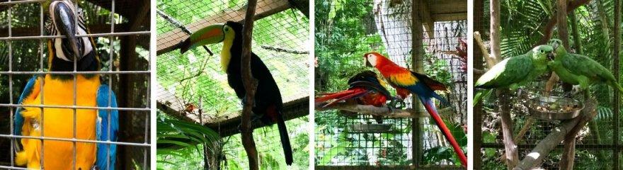 macaw-mountain-12