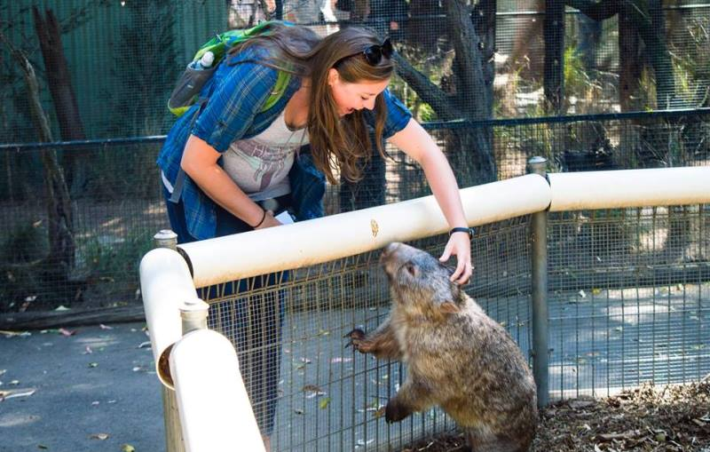 Featherdale Wildlife Park Wombat