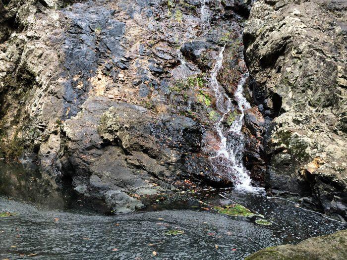 Free Things to do in the Sunshine Coast _ Kondalilla Falls