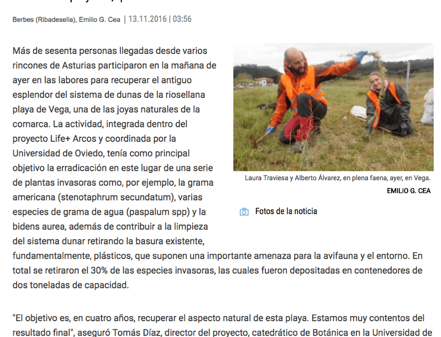 """The Ribadesella Beach of Vega, cleared of a third of invasive plants"""