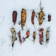 Arctic Gardening – How does your arctic garden grow?
