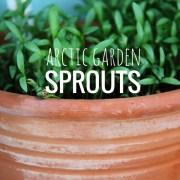 Arctic Garden: Sprouts
