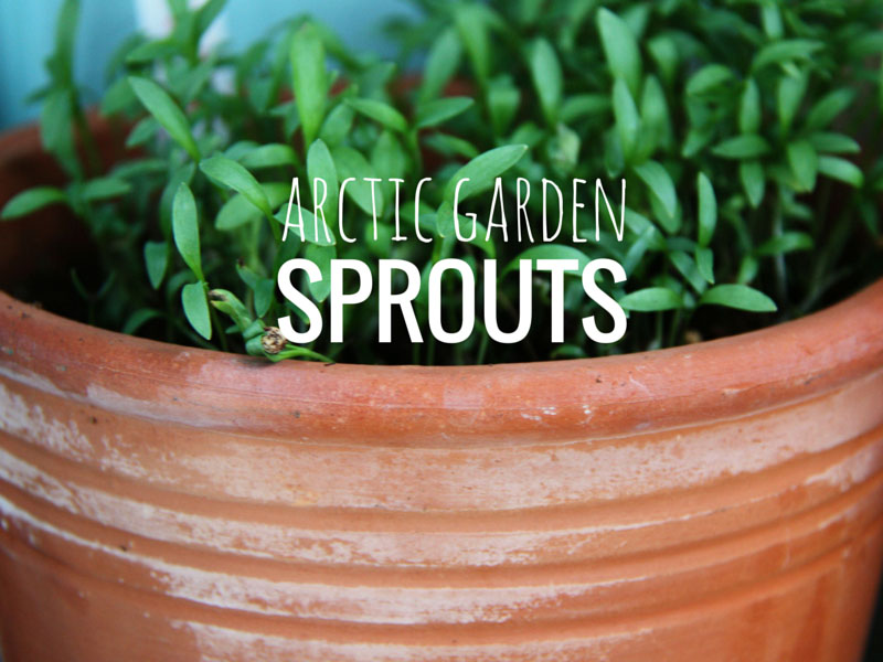 ARCTICdeco.com: Arctic Garden Sprouts,
