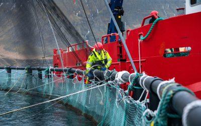 Mikill gangur í laxeldinu hjá Arctic Fish