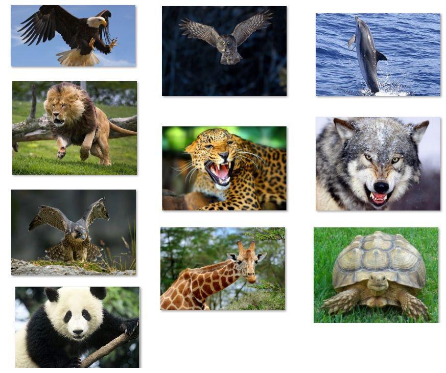 Vision Binocular Animals