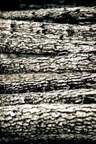 Краски осени в последний день сбора грибов в 2012 4