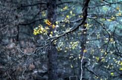 Краски осени в последний день сбора грибов в 2012 9