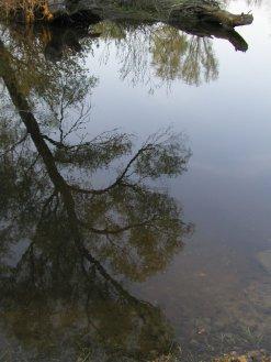 Фото природы. Пейзажи. Текстуры. Профессиональный фотограф в Киеве. 73
