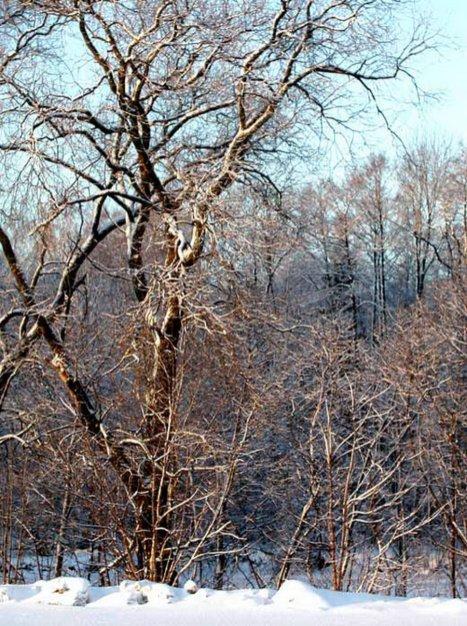 Фото природы. Пейзажи. Текстуры. Профессиональный фотограф в Киеве. 103