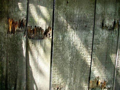 Фото природы. Пейзажи. Текстуры. Профессиональный фотограф в Киеве. 106