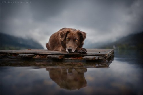 Фотограф создает душевные портреты лучших друзей человека 19
