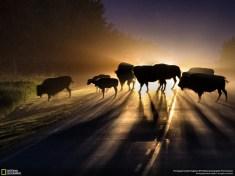 national-geographic-photo_kiev_0097