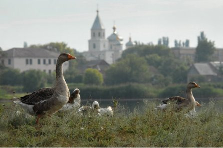 0192_Ukraine_Orthodox_Photo