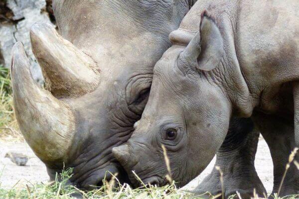 Preserving Namibia Safaris: Saving the Black Rhino