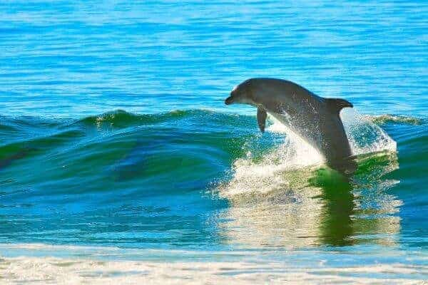 Connecting with Dolphins in Namibia