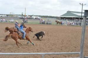 Team Roping Event in outdoor Arena